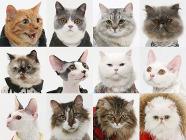 Calendrier de chats