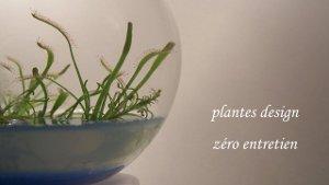 Plantes design zéro entretien