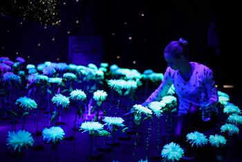 végétal luminescent